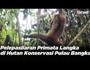 Embedded thumbnail for Hari Primata Indonesia